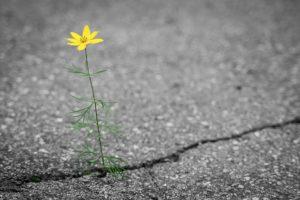 Plants help expose driveway cracks