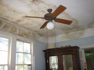 ceiling mold growth