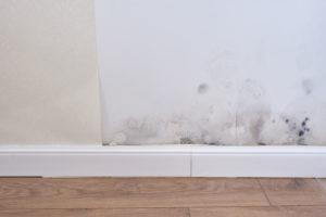 mold growing above baseboard