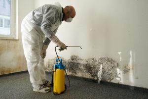 mold expert spraying mold growth