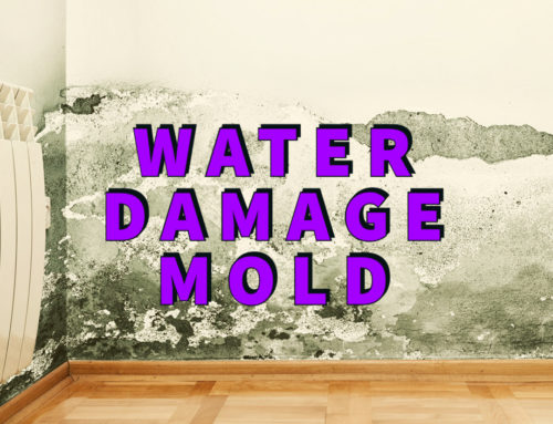 Water Damage Mold: 8 Foolproof Steps For Effective Recovery